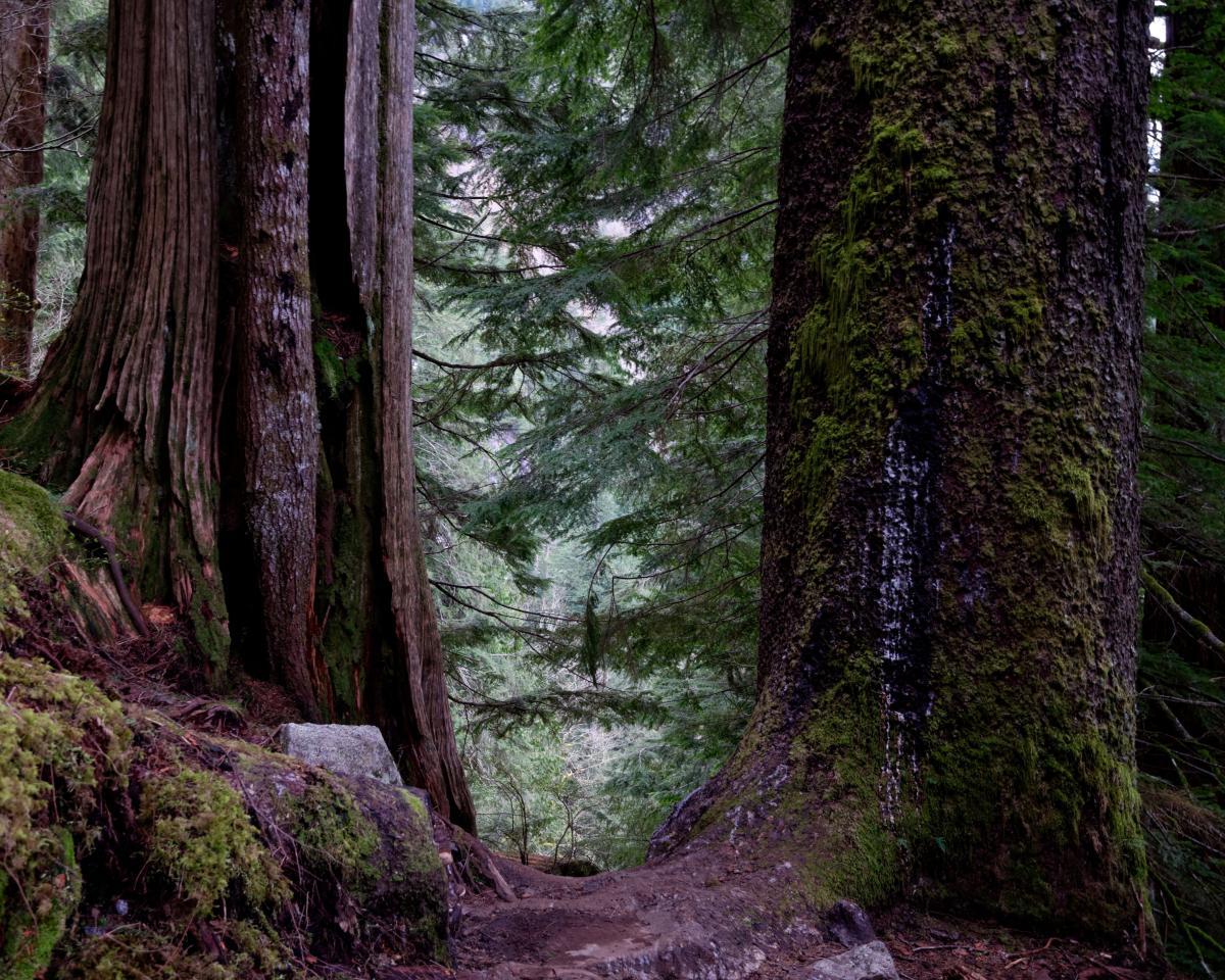 Примеры изображений Nikon 16-80 DX - красивый лес