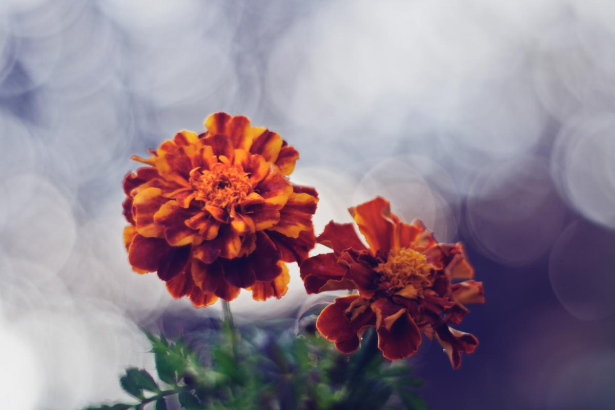 Боке цветы