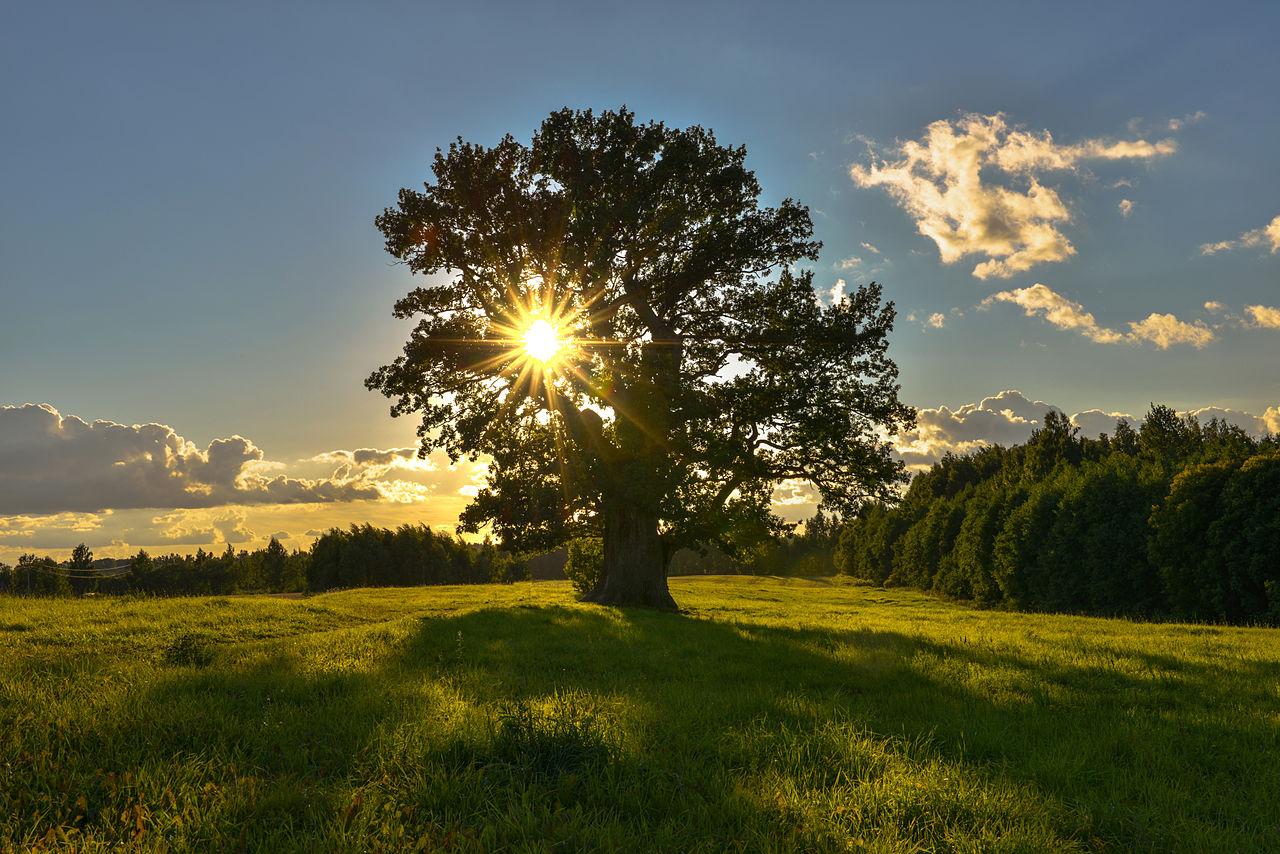 Естественный свет в фотографии