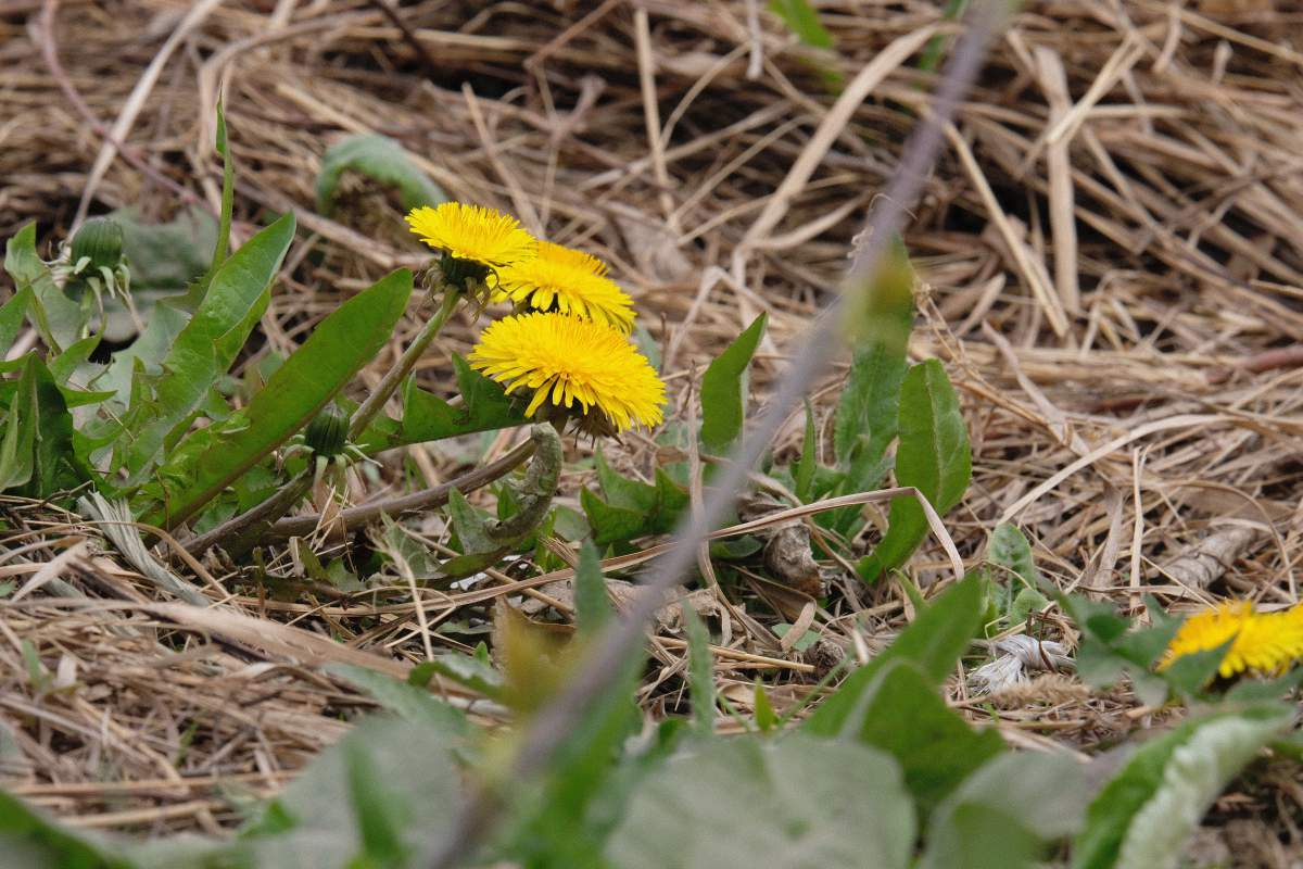 Более длинные зум-объективы часто используются длясъемкикрупным планом цветов и маленьких насекомых.