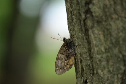 Бабочка, что и на фото, было сделано на минимальной дистанции фокусировки 0,7 м при ф.р. 200 мм.